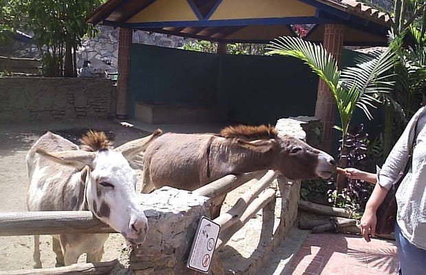 Zoo Expanzoo