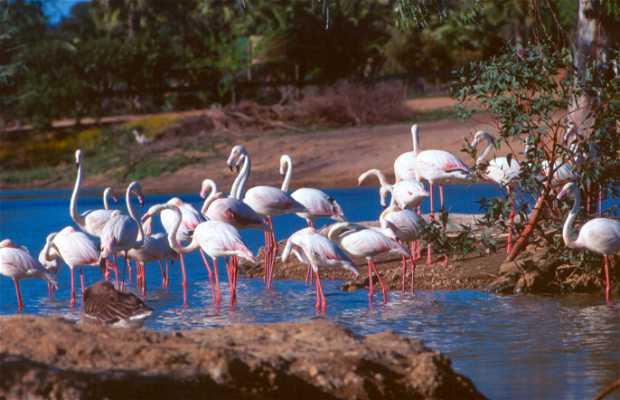 Concerted Nature Reserve Birds of La Cañada