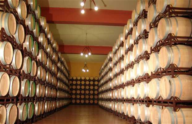 Wineries Pagos del Rey