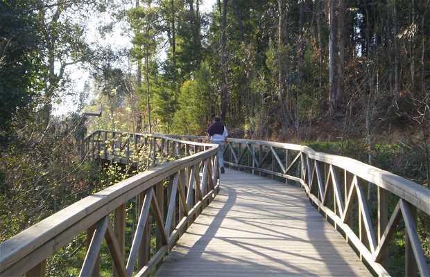 Promenade Fluviale à Illa Fillaboa