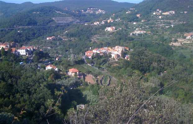 Boragni
