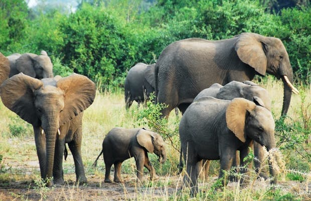 Reserva de Fauna Kigezi