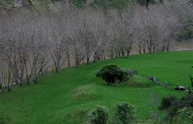 Río Wanaka