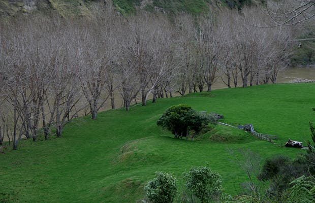 Wanaka River