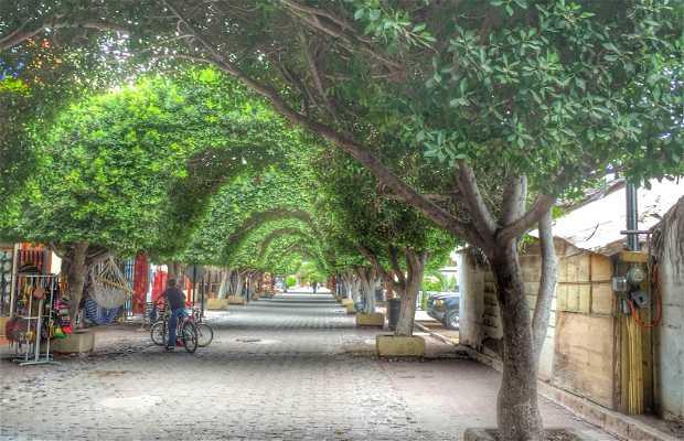 Calle salvatierra