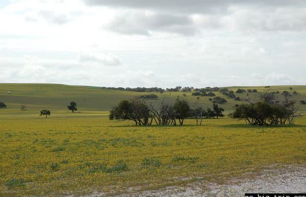 Parco Nazionale Badgingarra