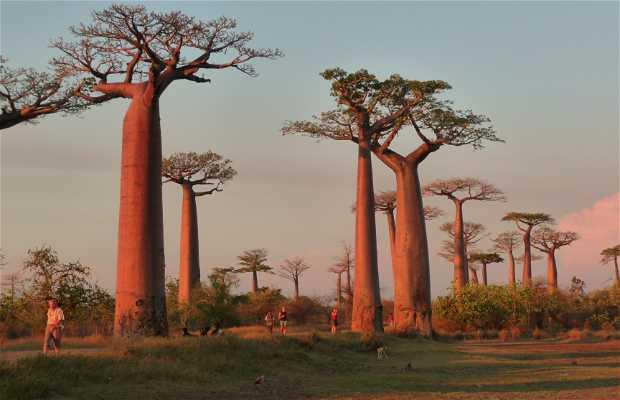 Vicolo dei Baobab