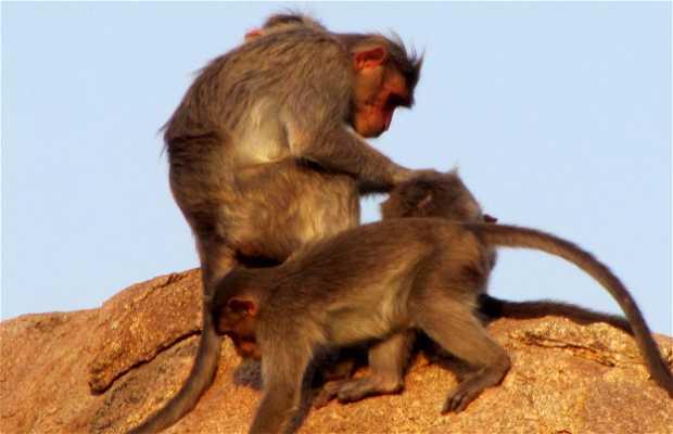 Mandapa d'Hanuman