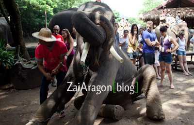 Campo de elefantes de Maesa