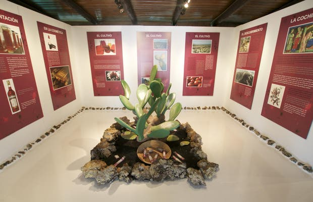 Museo Aloe Plus Lanzarote
