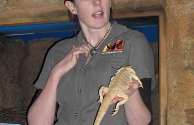 Reptile Center