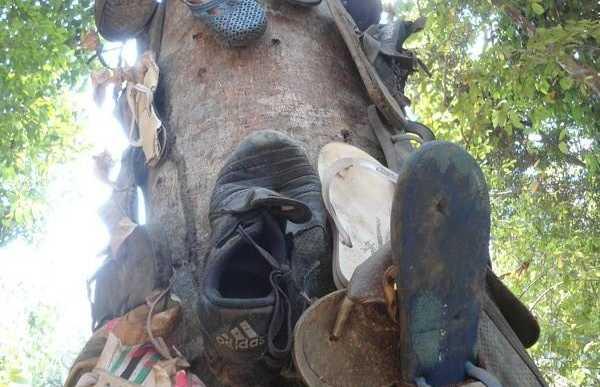 L'arbre aux tongs de Ton Sai