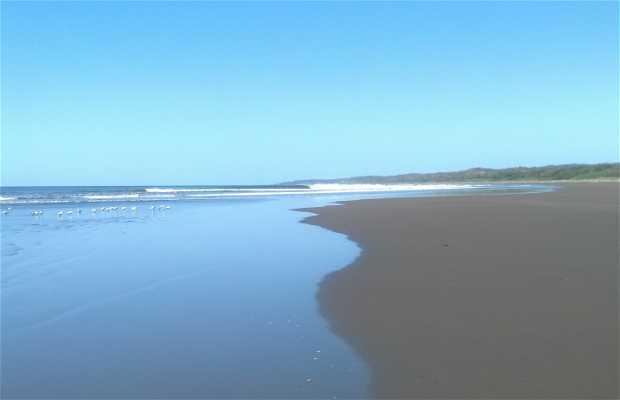 Boca Nosara