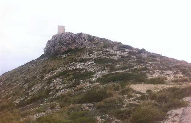 Atalaya albercutx