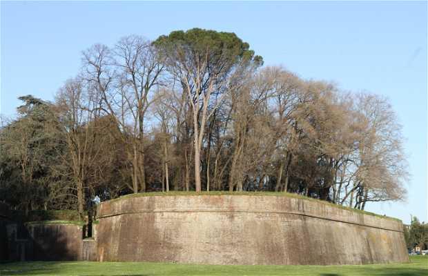 Les murs de Lucca