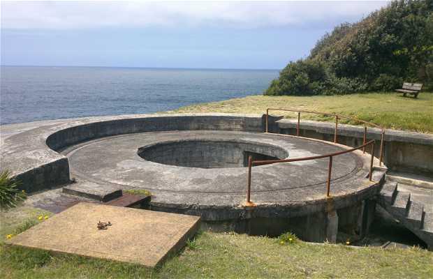 Shark Point Battery