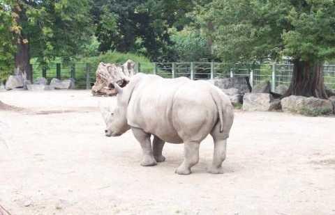 Zoo de Phoenix Park