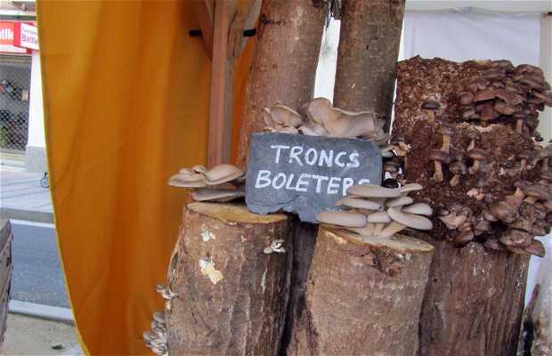Bolets de Soca in the Modernist Fair