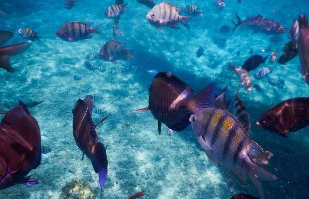 Arrecife Paraíso