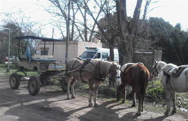 Paseo a caballo o carreta en Tomás Jofre