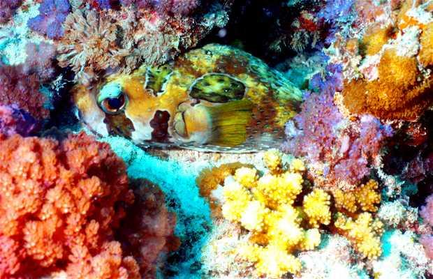 Snorkel en Nungwi