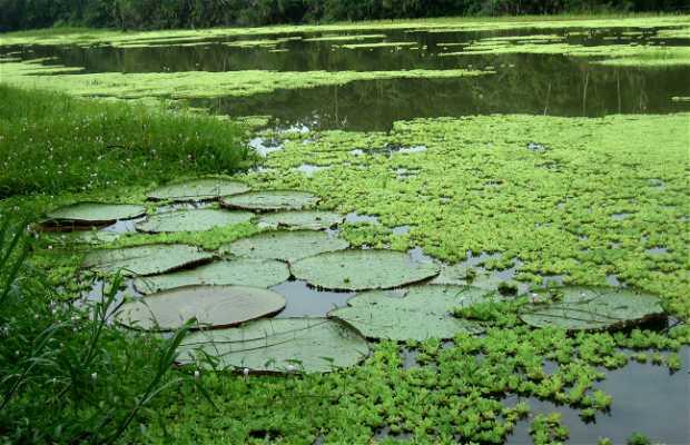Expedición a la Amazonía Peruana