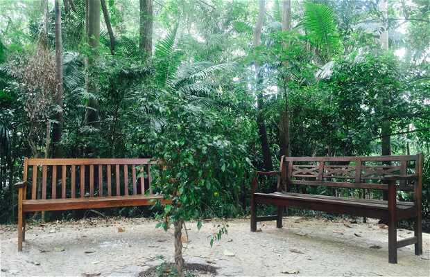 Bosque do Brooklin
