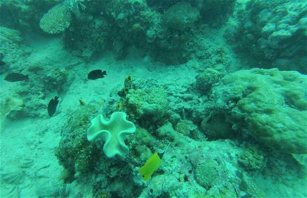 Plongée aux îles Perhentian