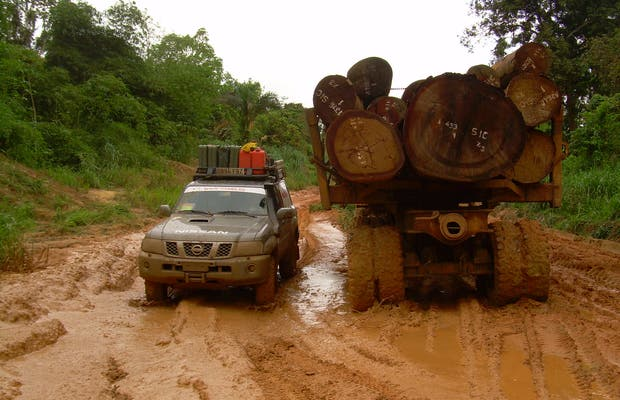 Árvores da Selva de Mayombe