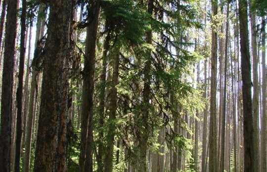 Welcome Creek Wilderness