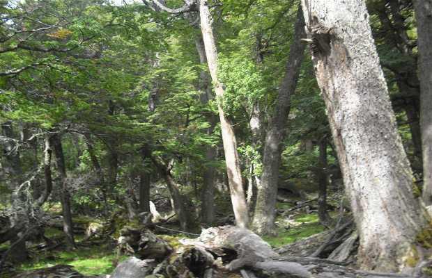 Bosques Perito Moreno