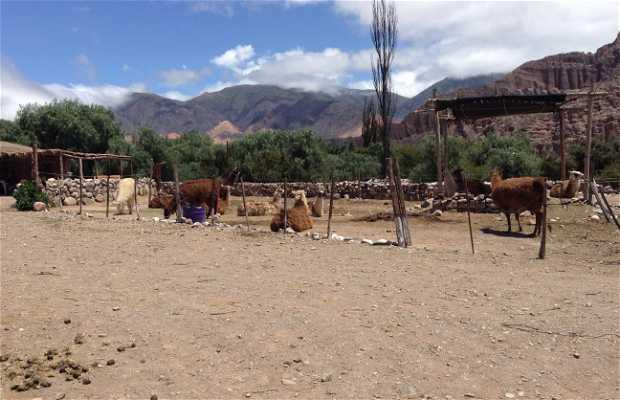 Caravana de Llamas