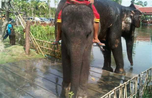 Ayutthaya Klong Sa Bua Floating Market & Water Theatre