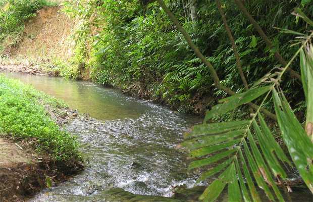 Raman Forest Park