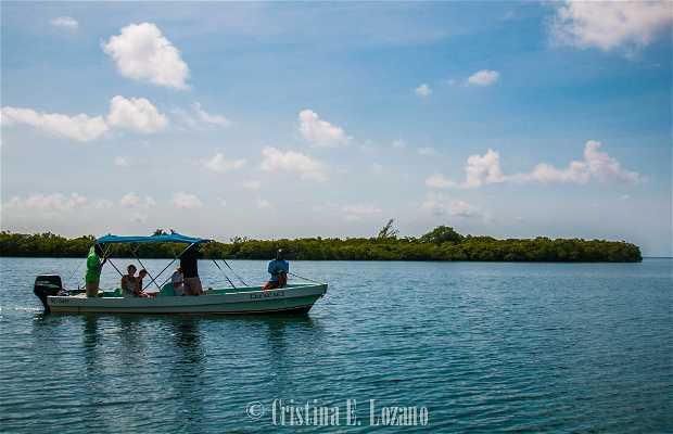 Sittee River Marina Tours