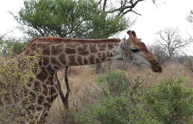Safári 4x4 en Kruger Park