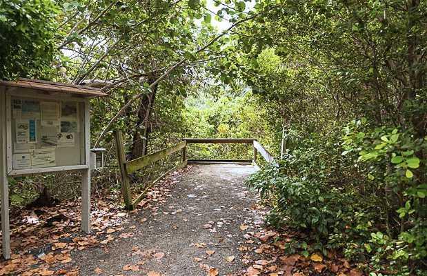 Senderismo en Parque Hugh Taylor Birch