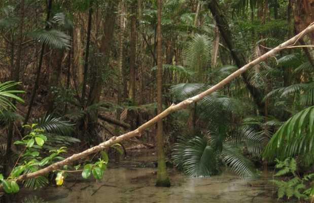 Wanggoolba Creek, Fraser Island