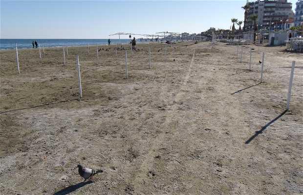 Playa Foinikoudes 2