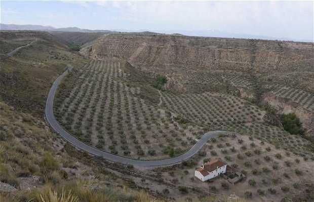 Llano de Olivares