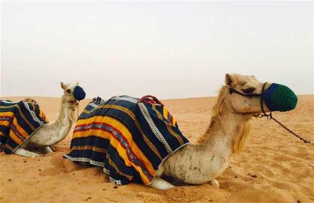 Alpha tours dubai-excursión desierto
