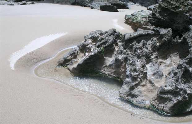 Playa Buzerktun