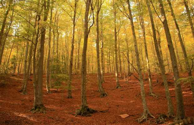 Bosque Santa Fe del Montseny