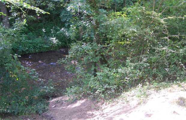 Forêt de Senpere