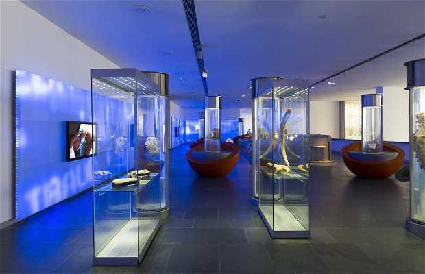ARQUA - Museo Nacional de Arqueología Subacuática