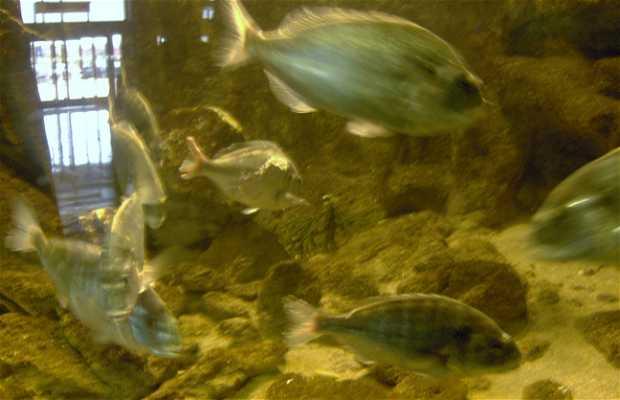 Aquarium du Parque Principado