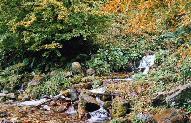 Mongallu cascade