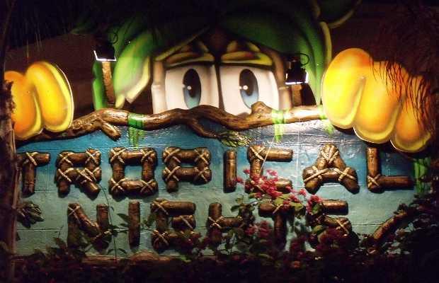 Tropical nights Disco-Pub