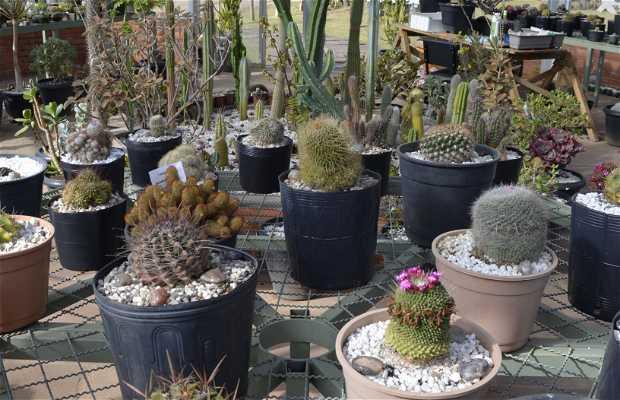 Cactário do Jardim Botânico