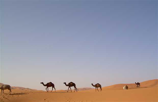 Haimas del desierto
